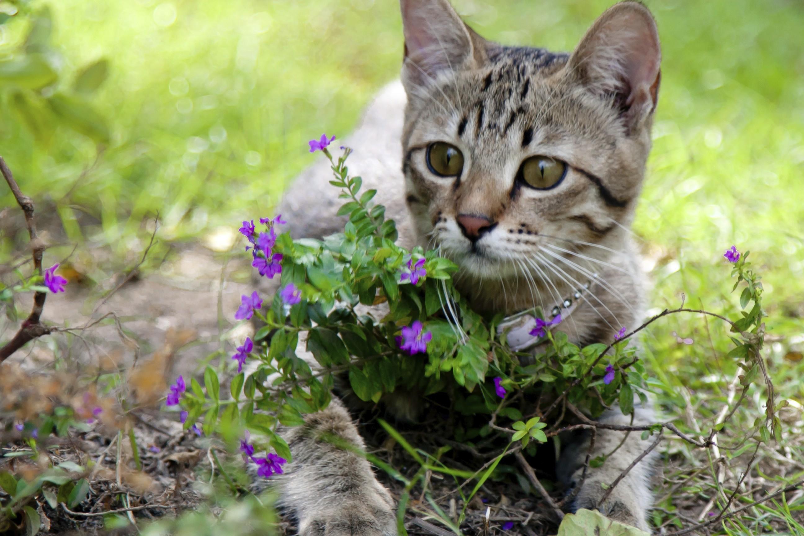 Come allontanare i gatti randagi dal giardino - Allontanare i gatti dal giardino ...